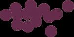 Schwarze-Johannisbeere